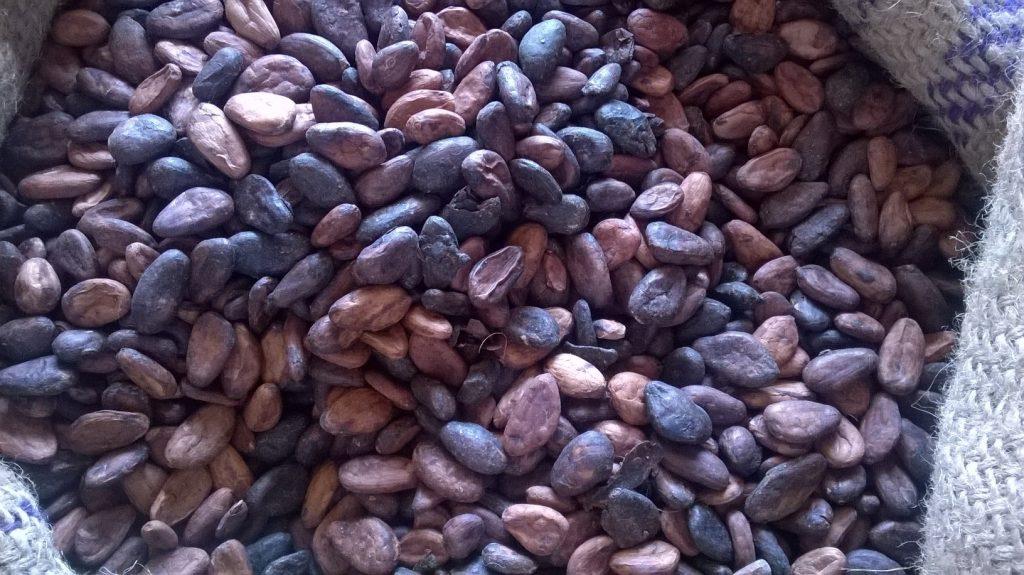 Madagascar Cocoa beans