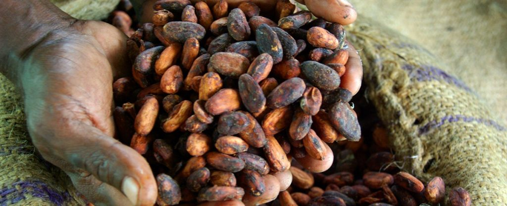 Cocoa beans MadaMarket Export