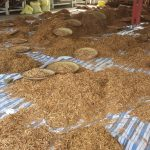 Supplier of Ceylon Cinnamon Madagascar