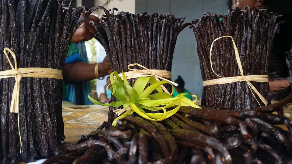 madagascar vanilla bean - MadaMarket Export