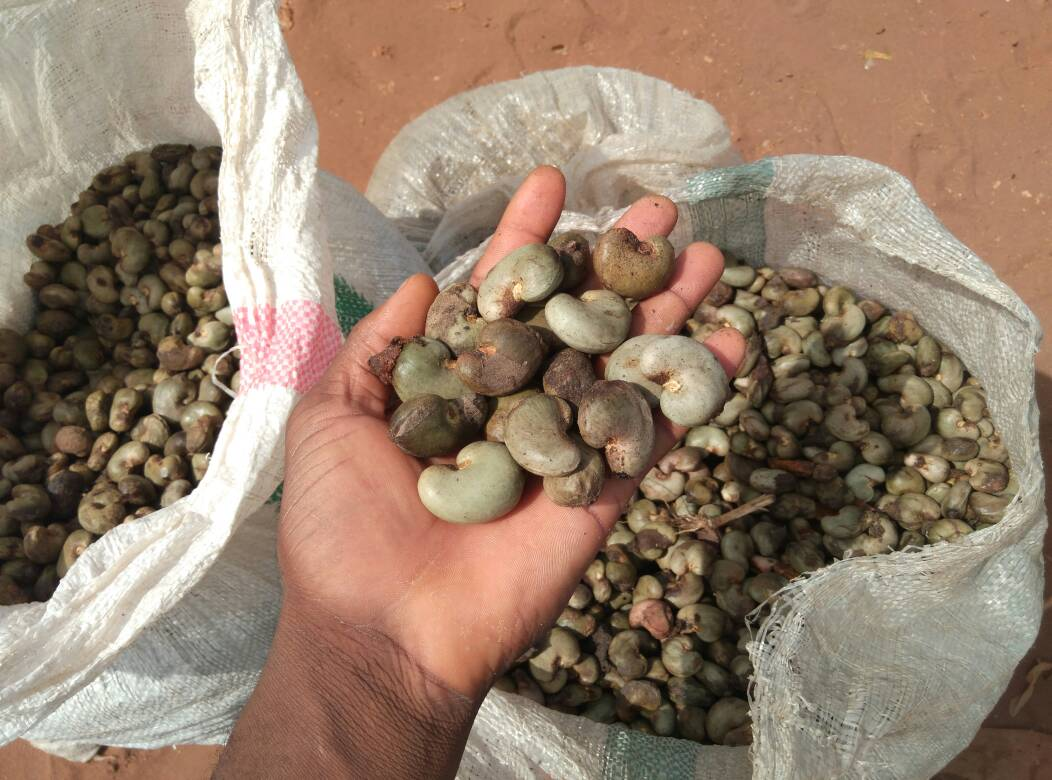 Raw Cashew nut Supplier