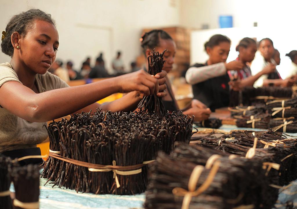 Madagascar Vanilla Bean supplier