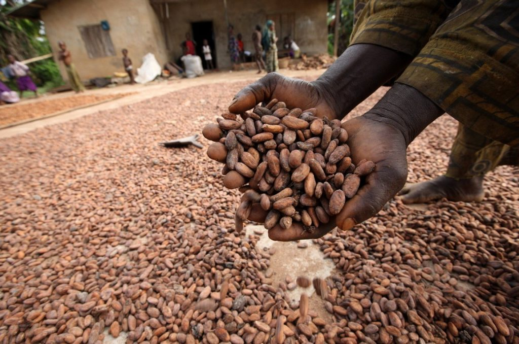 cacao madagascar - producteurs de cacao madagascar